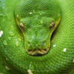 Giới thiệu một số công cụ hỗ trợ lập trình Python